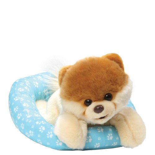 Boo Dog In Bed - Boo The World's Cutest Dog