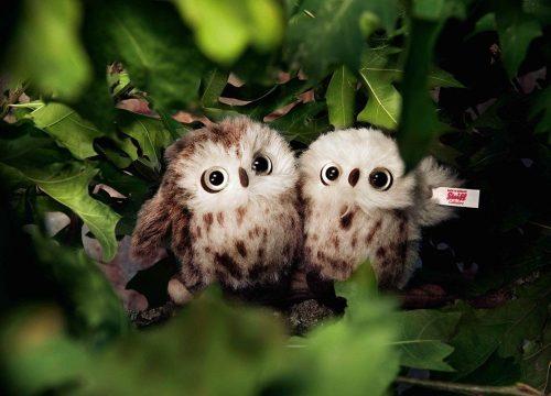 Steiff Owl Set - Limited Edition EAN 006609